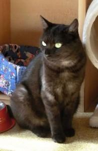 Má černá kočička chuť jiný