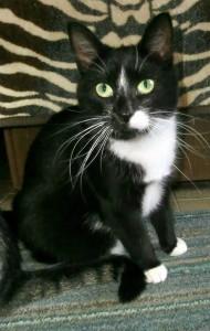 ošklivé černé kočička obrázky