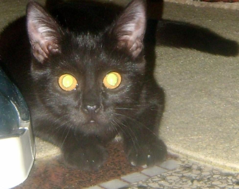 pic mladé černé kočičky velký zadek zralý anální sex