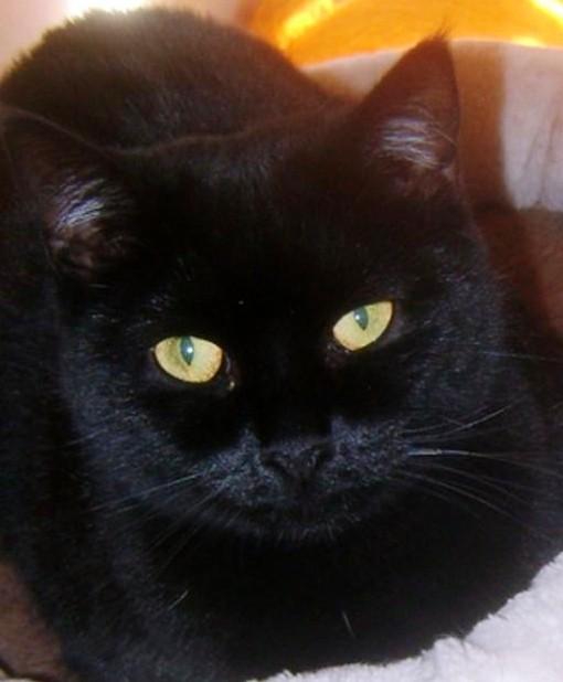 si hraje s černou kočičkou