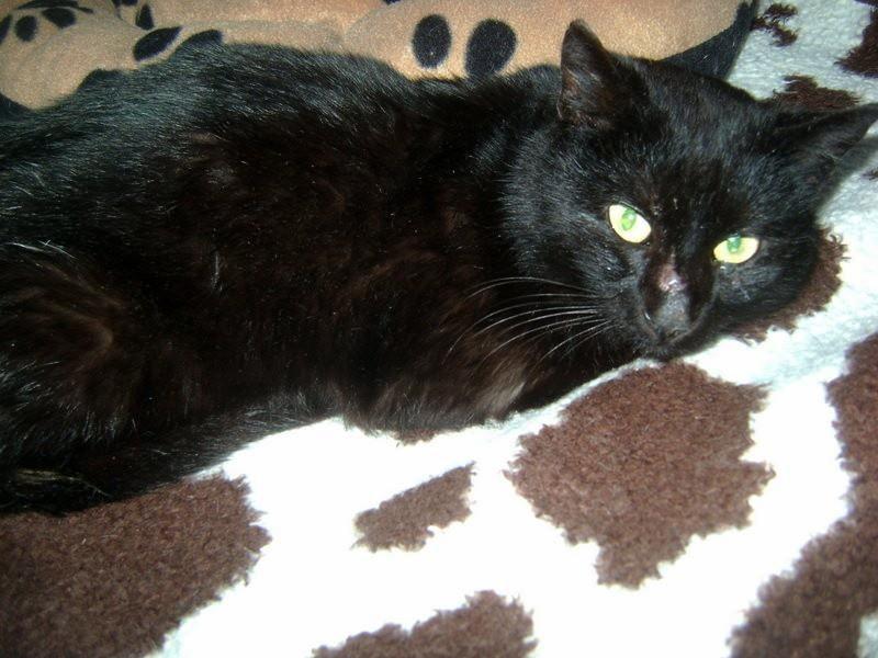 Chuť černé kočičky