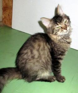 Těsné fotky kočiček